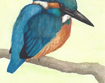 The Kingfisher Glorious azure