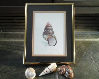 Lee Caltagirone framed Print Numbered Signed 889/1500 Christie vintage art artist Seashell ocean