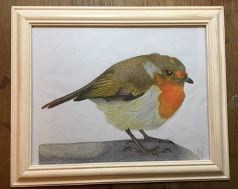 Robin water color pencil painting
