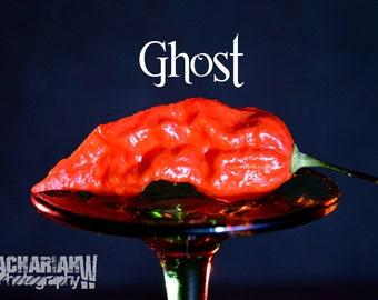 Ghost Pepper (Bhut Jolokia) 15+ Seeds
