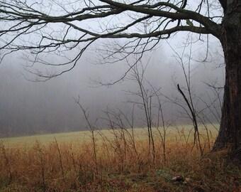 Late Fall Foggy field