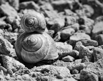 Shells - Shells Photo - Beach - Beach Photo - Black and White - Digital Photo - Digital Download - Instant Download - Beach House Decor