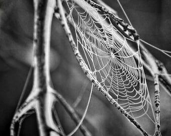Web - Web Photo - Black and White - Digital Photo - Digital Download - Instant Download - JPG