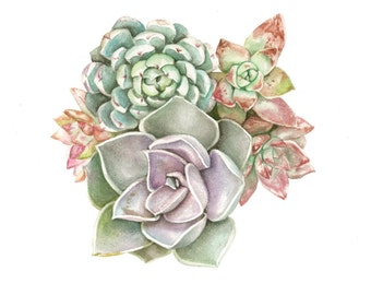 Succulent Watercolor Print - Pastel Assortment