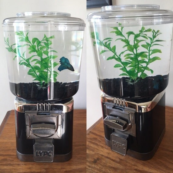 Repurposed fish tank gumball machine by craftsandscenery for Gumball fish tank