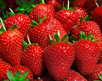 Strawberry Seeds,600+Sweet Strawberry, Organic Seeds, Fragaria, Fruit Seeds, Berry Seeds, Perennial Plants,Edible Fruit,Exotic Fruit Seeds