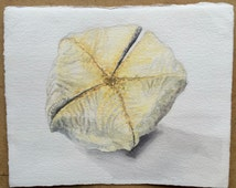 Coral or Starfish ..Watercolor on paper..