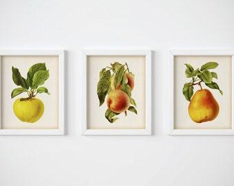 Kitchen print set, Fruit print, Fruit wall decor, Wall art kitchen, Set of 3 prints, Apple print, Peach print, Pear print, Printable, JPG
