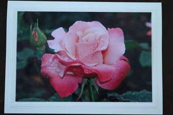 Raindrops on Roses (4 cards)
