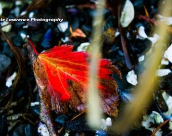 The Lone Leaf