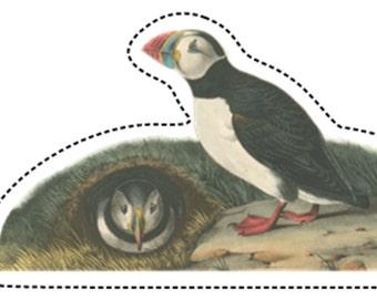 Arctic Puffin - Vintage Wildlife Illustration Vinyl Sticker