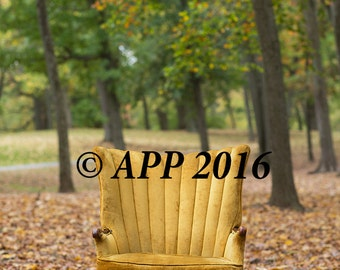 digital background for  composites of gold chair in a park in the fall