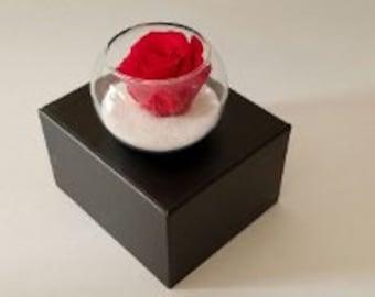 Red Preserved Rose arrangement