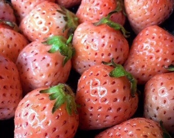 Organic Food Pink Strawberry Fruit Growing 50 Seeds Potted Plants
