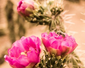 Desert Flower Photo Print