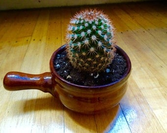 Potted Cacti in tangine pot, morrocan style!