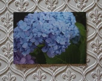 Hydrangea Notecards  Pack of 8