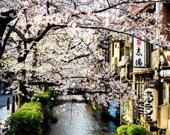 Japan Kyoto nature photography - cherry blossoms - sakura - fine wall art - home decor - zen