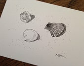 Original Ink Drawing, Nature Art, Seashell Drawing, Black and White, Seashell Illustration, Seashell Art Drawing, Small Drawing, 5 x 7""