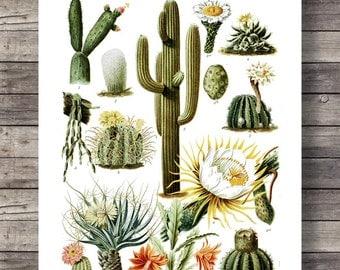 Cactus Vintage botanical illustration | Vintage Cactus cacti art print | Printable wall art  - Instant download digital print