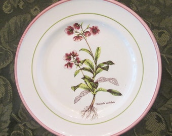 Two Vintage Salad/ Cake Plates - Primula Pottery of Italy - Pink/ Green Perennial
