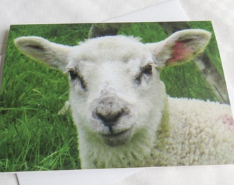 Lamb Card, Greetings Card, Blank Card, Nature Photography Card,  Baby Animal Card, Farm Card