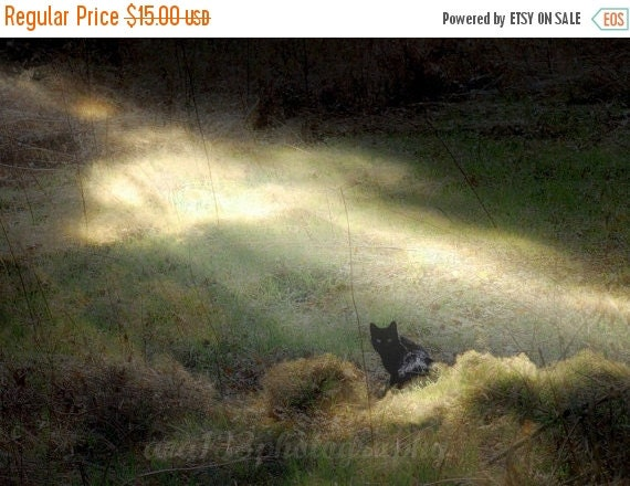 40% OFF SALE Cat Fantasy Photography Animal Print Pet Nature Picture Surreal Photo Black Cat Cat Photography Cat 5x7 inch Print  Bewitched