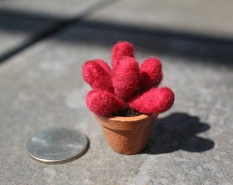 Miniature Needle-felted Succulent - Crassula Clavata #1