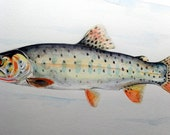 Trout Fish Painting Watercolor Original Painting Not a Print