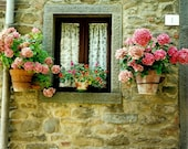 Cortona Cottage Window Garden - Italian Stone Bungalow - Pink Hydrangeas - Original Colour Film Matted Photograph by Suzanne MacCrone Rogers