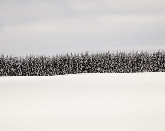 Forest Winter Tree Picture - Tree Print - Winter Ski Lodge Decor - Enchanted Forest - Large Horizontal Landscape Photograph - Nordic Picture