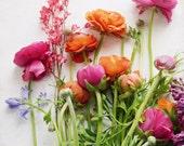 "Colorful flower still life - floral wall art - nature - ranunculus flowers - rainbow colors - white botanical print 11x14 8x10  ""Spring Joy"""