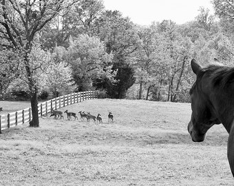 Horse Photography, Animal Photography, Deer, Wildlife, Horse Art, Rustic, Farmhouse Decor, Nature,  Landscape, Black & White - The Look Outs