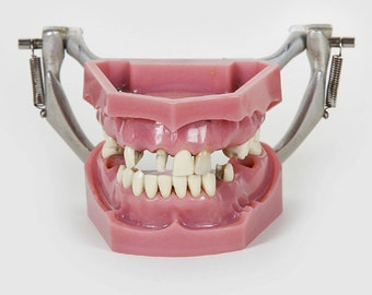 Loved to Death Antique Dental Model With Teeth