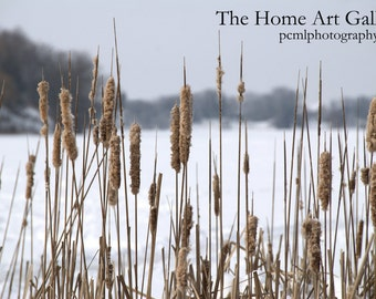Reeds in the Snow - 8x12