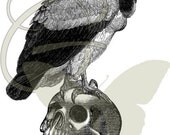 Bird Vulture Illustration Animal Vintage Halloween Digital Image Transfer Printable Clip Art 149