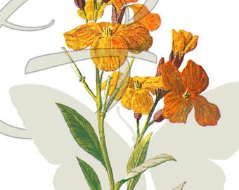 Flower Digital Download Clip Art Wildflower Botanical Art Image
