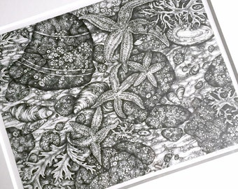 Tidal Pool Drawing, Framed Stipple Ink Drawing, Framed Original Art, Tidal Pool Starfish Original Art, Framed Black and White Ink Drawing