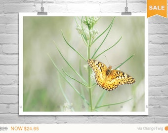 Sale 15% Golden Butterfly, Fine Art Print, Nature Photography, Soft Nature, Pale Green, Insect Art, Garden Art, Butterfly Picture, Canelo Hi