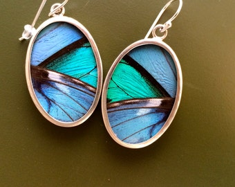 Real  Butterfly Wing earrings - Large wing Banded Morpho, 2 species in one.  Organic, fair trade, hippie, gypsy, natural gift.  Xmas girl