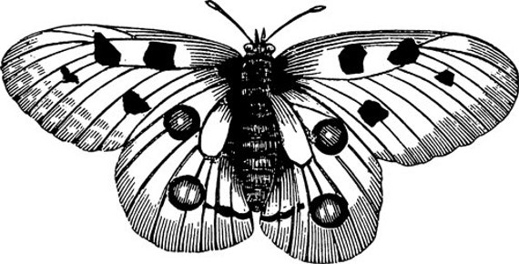 butterfly moth Digital Image Download art graphics insects bug coloring page printables for cards t shirts pind buttons etc