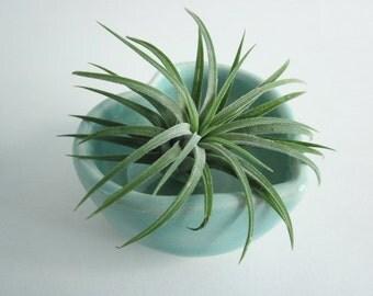 Desk decor, Air plant planter, heart planter, Cubicle decor,  planter,  ring holder