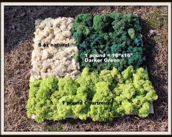 Bulk Reindeer Moss 1 pound bag Preserved in 3 Beautiful Colors-Natural-Chartreuse Green -Basil dark Green-Sold in a 9x12 gal...