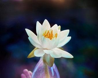 Water Lily Evening, Fine Art Print, Flower Photography, Flower Decor