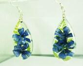 Blue Velvet,  Real Flower Earrings,   Pressed Flower Jewelry, Resin (1683)