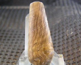 RESERVED B RARE Hells Canyon Petrified Wood Freeform Designer Cabochon