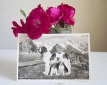 St. Bernard Postcard, Antique Swiss Photo Postcard, Lucerne Switzerland, Dog Photograph, Mantel or Wall Decor, Black and White, Swiss Alps
