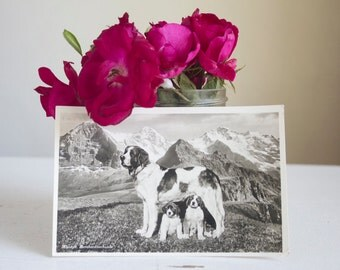 St. Bernard Postcard, Antique Swiss Photo Postcard, Lucerne Switzerland, Dog Photograph, Mantel or Wall Decor, Black and White, Swiss Alps