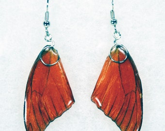 Real Butterfly Earrings - Orange Albtross - Hand Cast Resin