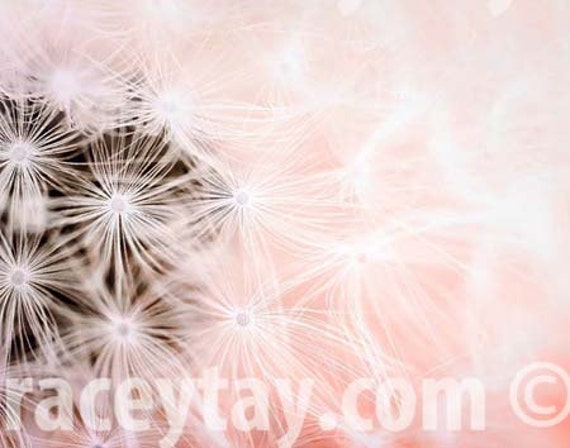 Pink, Dandelion Print, Girl Nursery Decor, Dandelion Wall Art, Pastel, Dandelion Art, Nature Photography